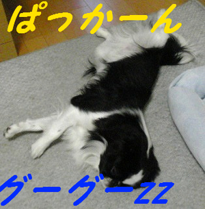 Image231_2