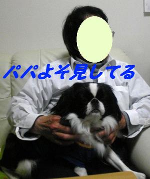 Image379