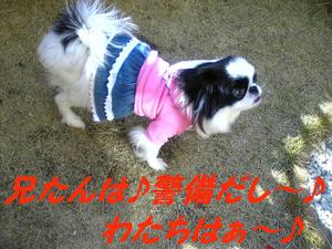 Image388