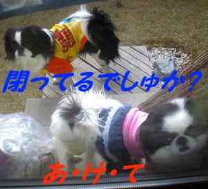 Image410