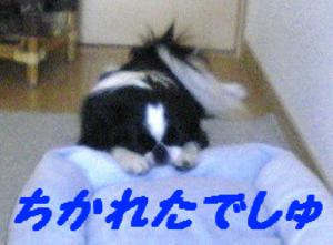 Image245