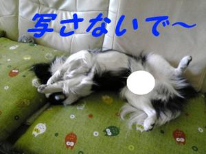 Image290