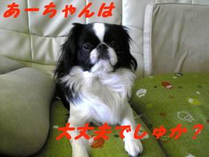 Image230