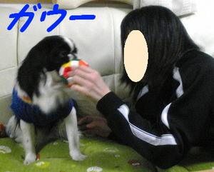 Image293