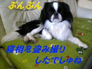 Image424