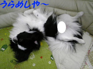 Image326