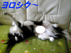 Image460