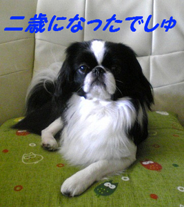 Image465