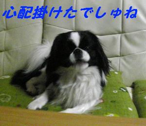 Image629
