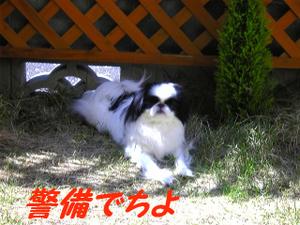 Image763