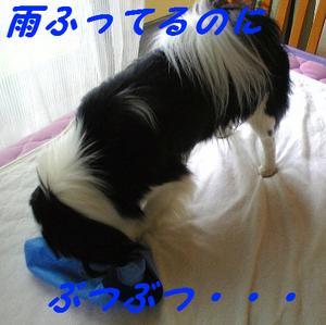 Image731