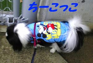 Image736