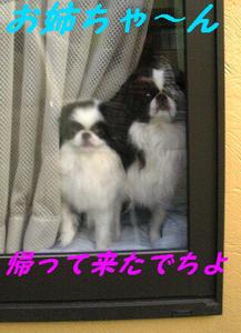 Image795