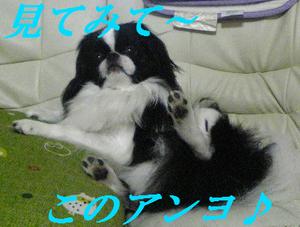 Image1174