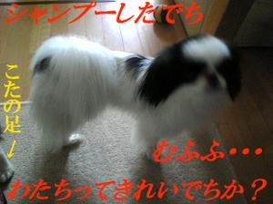 Image1192
