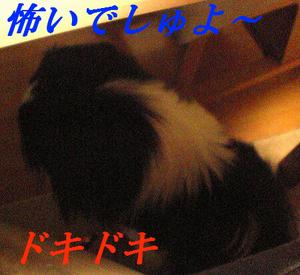 Image1233