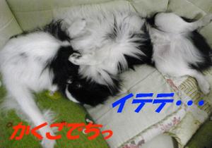 Image1316