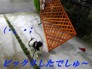 Image1163