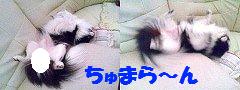 Image1014